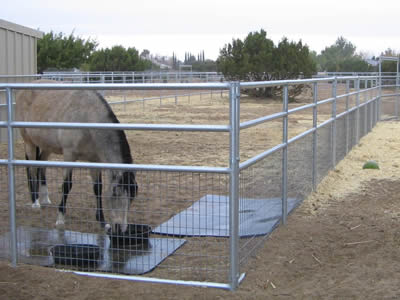 A corner of stainless steel welded livestock fence, horse in it is drinking, .two plates on the floor, two water pans on it.