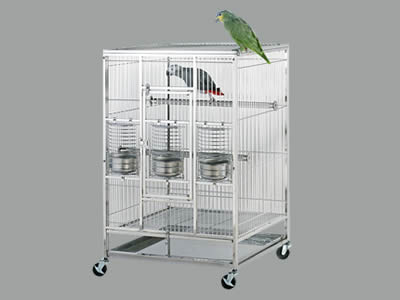 A stainless steel welded mesh bird cage, the gray parrot standing in the branch, the green on the top of the cage outside.